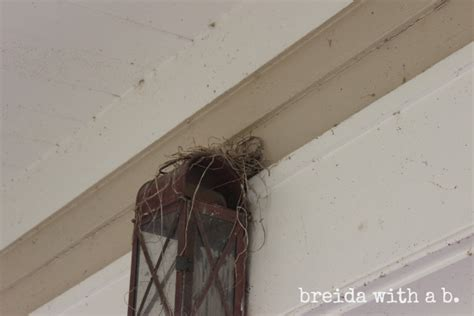 How Do I Keep Birds My Porch wrap your in chicken wire persistence is the