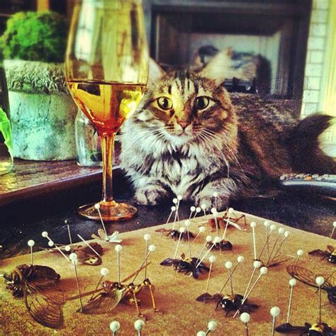 cat instagram the cats of instagram our latest obsession catster
