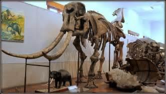 Fosil Gajah Daging berkunjung ke museum geologi bandung maps magazine