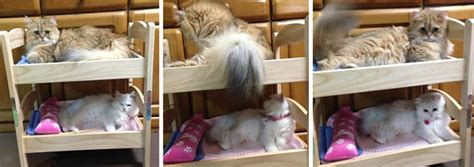 ikea cat bed japanese cat owners turn ikea doll beds into adorable cat beds bored panda