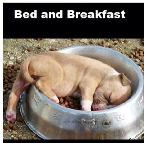 pet friendly bed and breakfast pet friendly policy victoria bed and breakfast birds of