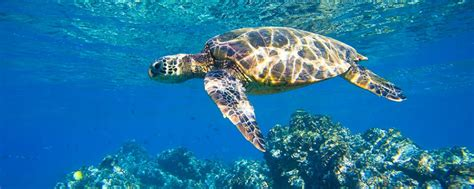 into the blue underwater sounds of nature for relaxation heron island into the blue virgin australia