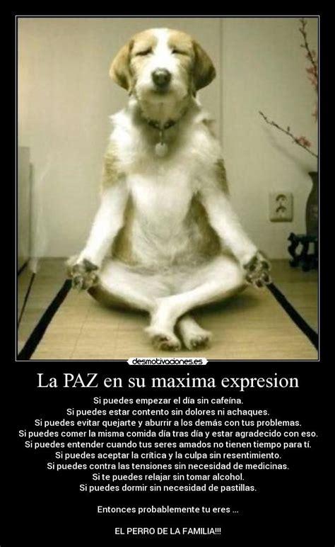imagenes de perro haciendo yoga im 225 genes y carteles de yoga pag 15 desmotivaciones