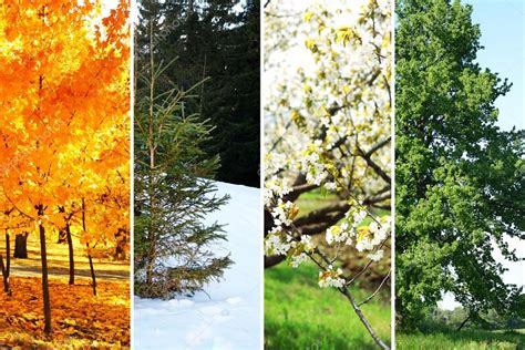 deep south four seasons seasons of the year tree www pixshark com images galleries with a bite