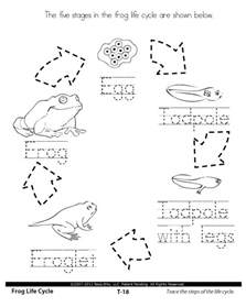 17 best ideas about frog life cycles on pinterest life