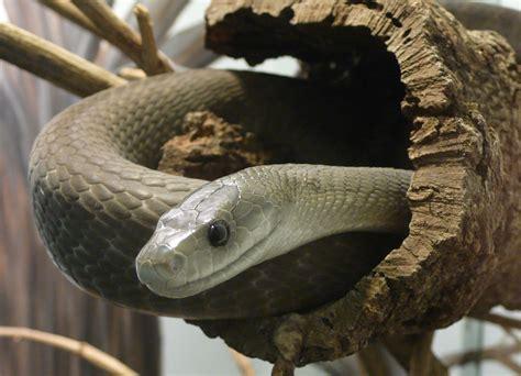 black mamba this world we live in black mamba venom may be a super