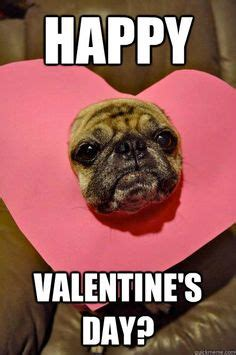 Happy Valentines Meme - 1000 images about pugs and more on pinterest funny