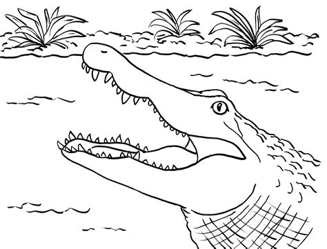 Coloring Page Alligator by Alligator Coloring Page Bell