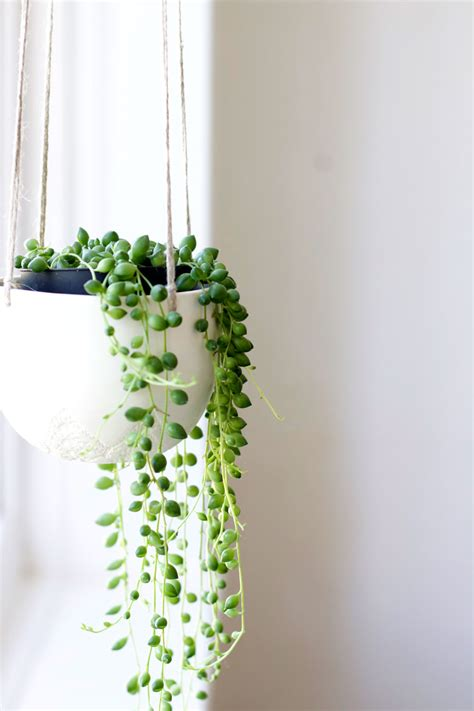hanging plant 2016 interior design trends de jong homes wagga builders