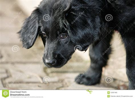 sniffing puppy royalty free stock photo image 12367465