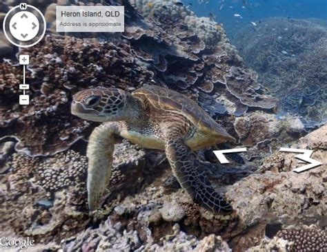 google images turtle google launches underwater street view video