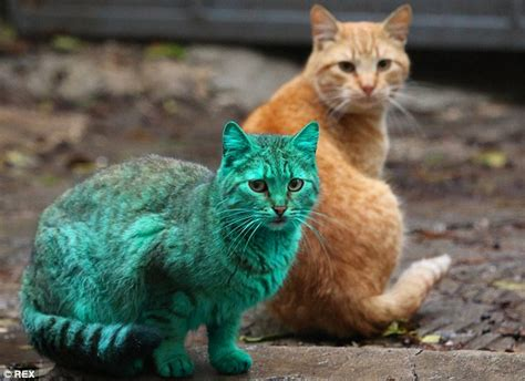 Green Cat stray green cat turns heads after sleeping on heap of