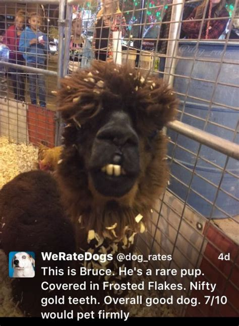 we rate dogs we rate dogs is the account the animal kingdom needed 18 pics