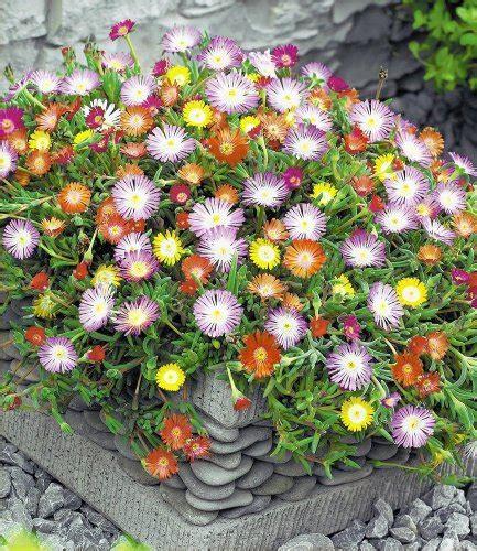 Baldur Garten Winterharte Pflanzen by Garten Top Kaufen Baldur Garten Winterharte Eisblumen