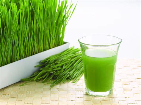 Juicer Wheatgrass wheatgrass how to grow why balcony garden web