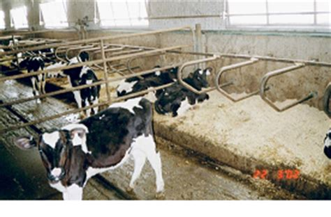 calf housing design calf house design ireland house design