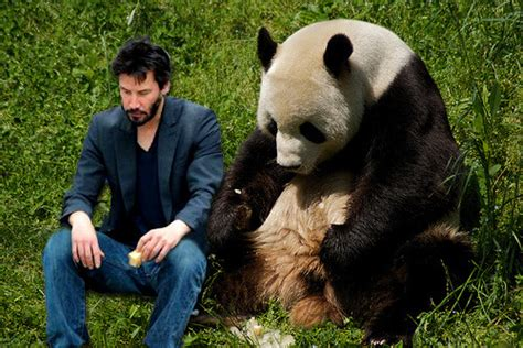 Sad Keanu Meme - sad keanu panda keanu are sad together submitted by