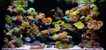 saltwater aquarium coral here is a list of 15 easy salt water aquarium reef corals that can be