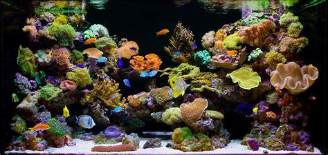 saltwater marine reef aquariums hollywood fish farm