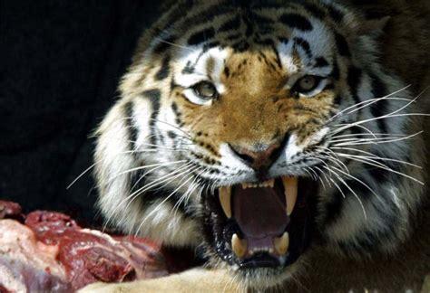 imagenes sorprendentes de animales salvajes animales salvajes animales salvajes