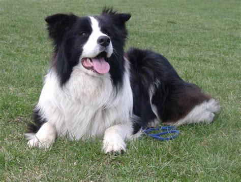 best medium sized house dog 10 of the best medium sized dogs