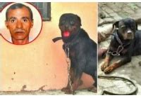 my rottweiler has bad gas serious tragedy as kills owner then eats his flesh in presence officers