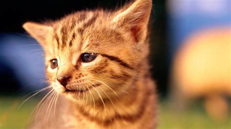 nieuwe kat in huis jippie een nieuwe kat simon de kater