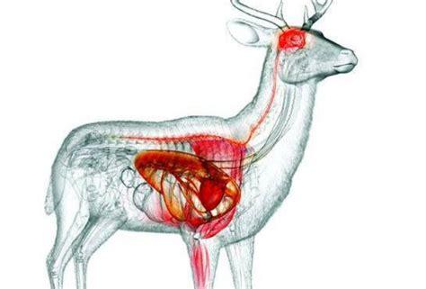 360 best target images on pinterest deer hunting gun 180 best silvercore interests images on pinterest