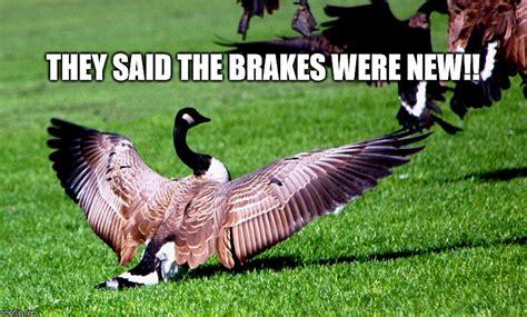 Goose Meme - geese imgflip