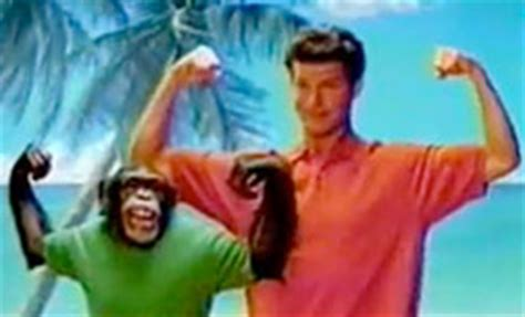 how much can a chimpanzee bench press monkeys south bay pets