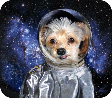 space puppies space