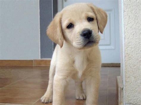 welpen gesucht einen hunde welpen gesucht in mannheim hunde kaufen und