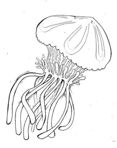 box jellyfish coloring page box jellyfish coloring pages coloring pages for free