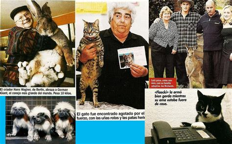 imagenes reales insolitas noticias de prensa reales e ins 211 litas de animales