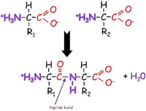difference b w hydration and hydrolysis hydrolysis reaction diagram dehydration hydrolysis 28