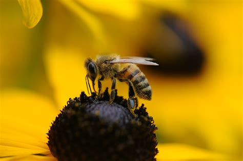 bee color bees and wasps facts out these colors will make