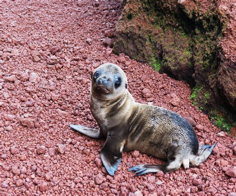 galapagos islands animals geek treks the world s most intimate zoo the