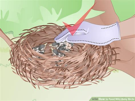 how to feed wild baby birds with pictures wikihow