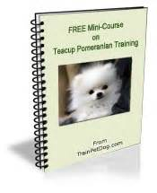 how to take care of a teacup pomeranian teacup pomeranian tips for teacup pomeranian breeds