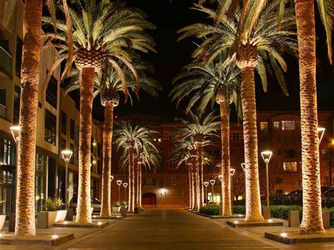 lights palm tree canary island date palm outdoor