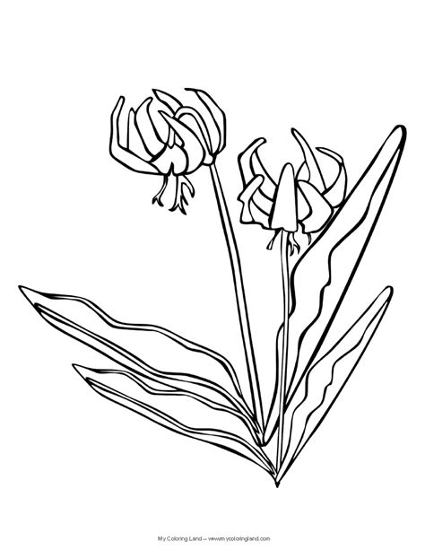 lily flower coloring page free lily flower coloring pages