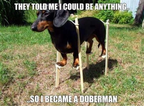 Weiner Dog Meme - silly dachshund meme makes me laugh pinterest
