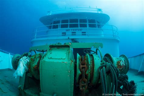 House Of Scuba by Cecilia Scuba Diving Palm Newest Ship Wreck