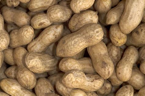 dry roasting process may turn harmless peanuts into allergy nightmares la times