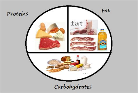 section 8 1 carbohydrates fats and proteins image gallery macronutrients list 3