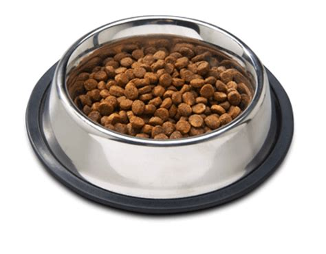 tlc puppy food cockapoo puppies low to no shedding allergy friendly