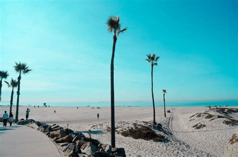 California Palm southern california palm trees history species guide