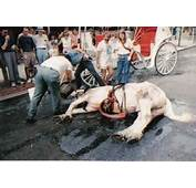 Two Carriage Horse Accidents Just Days After NYC Mayor