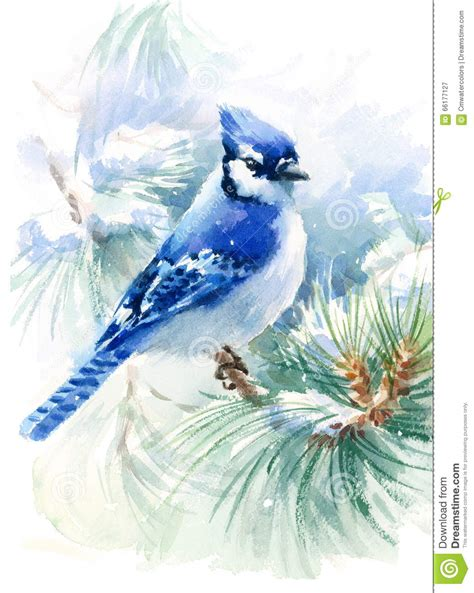 Blues On The Green Blue Bird On The Green Pine Branch Watercolor Winter
