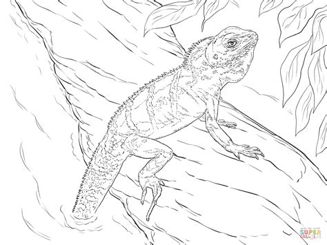 water dragons coloring pages realistic chinese water dragon coloring page free